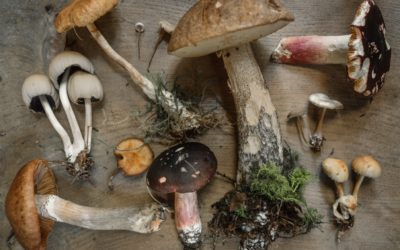 Mushrooms for Health and Performance